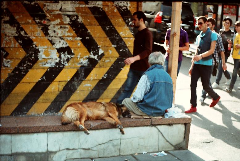 Թբիլիսի շուն փողոց անցում
