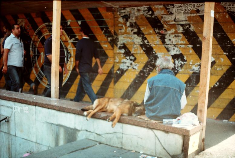 Թբիլիսի շուն անցում փողոց