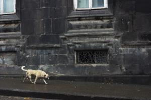 գյումրվա փողոցի շուն