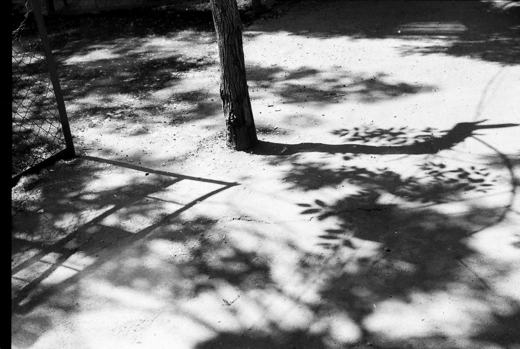 ստվեր բակ ծառ