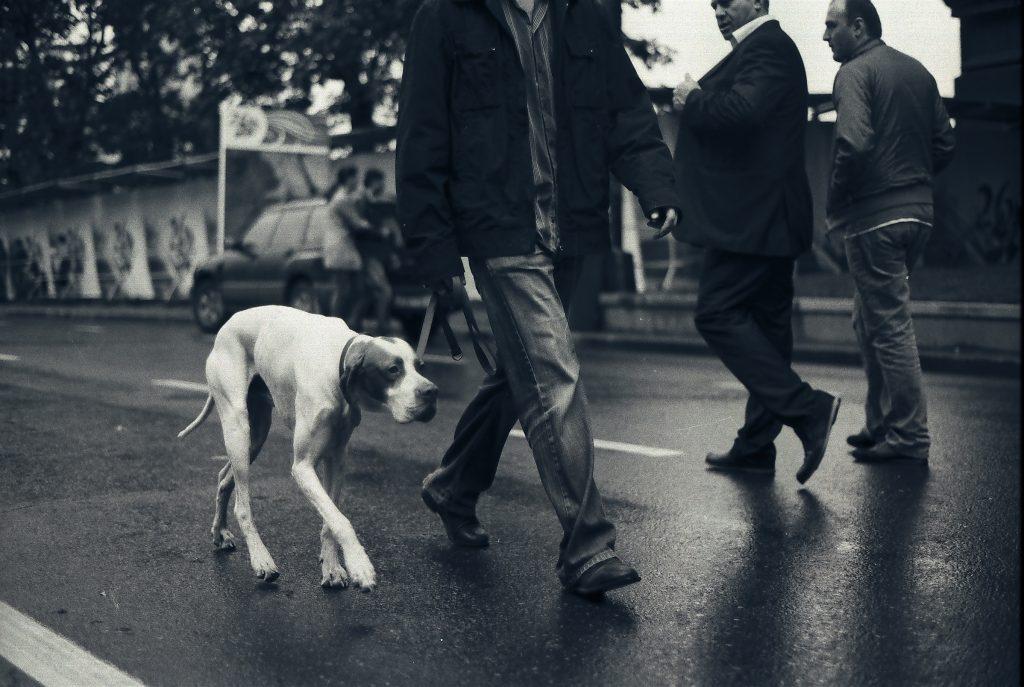 Թբիլիսի Շուն Tbilisi Dog