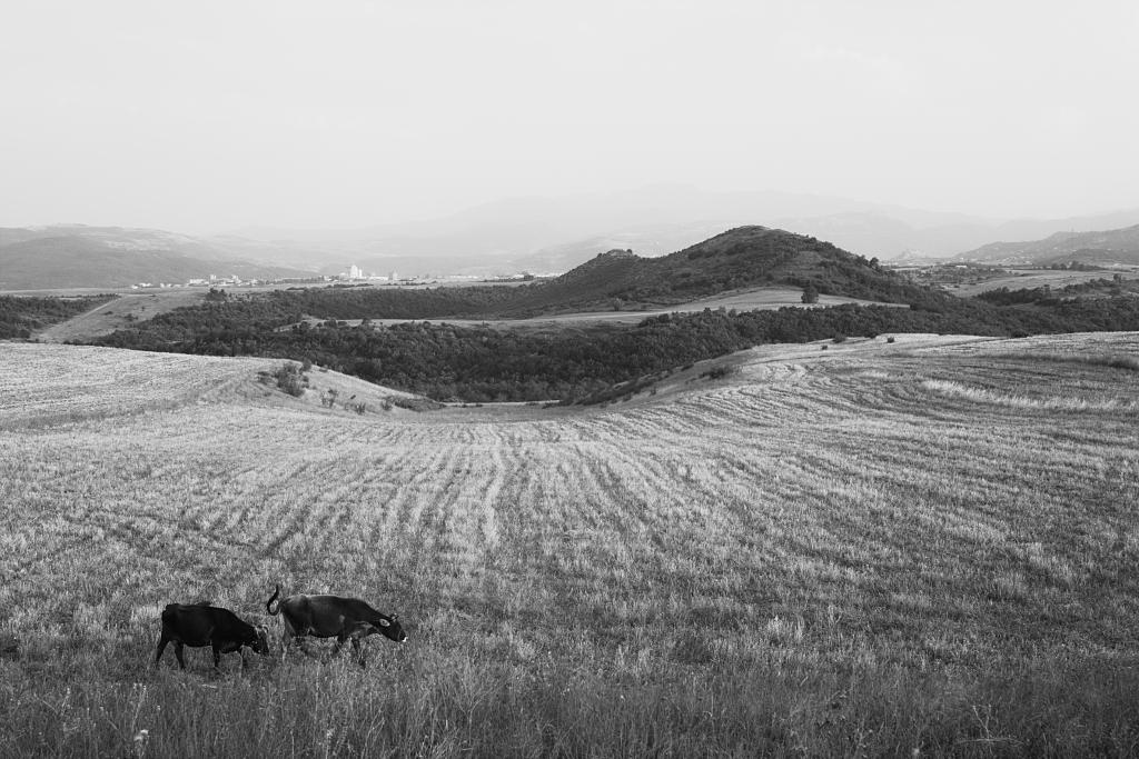 այգեստանի դաշտերում