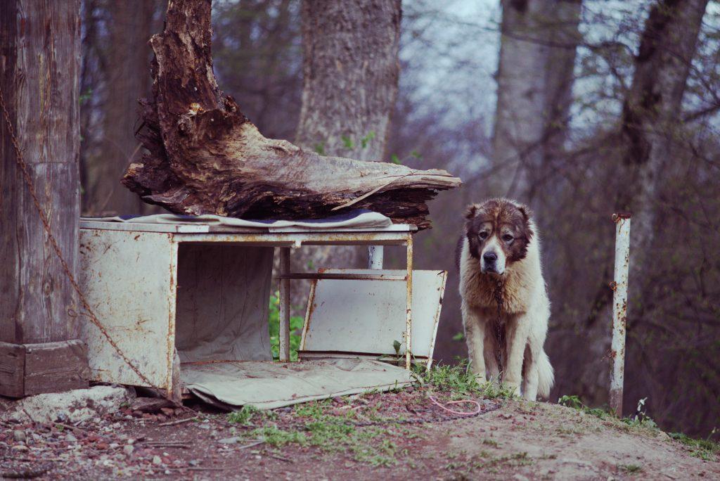չոբանի շուն «պարզ լիճ»֊ի կայանատեղում